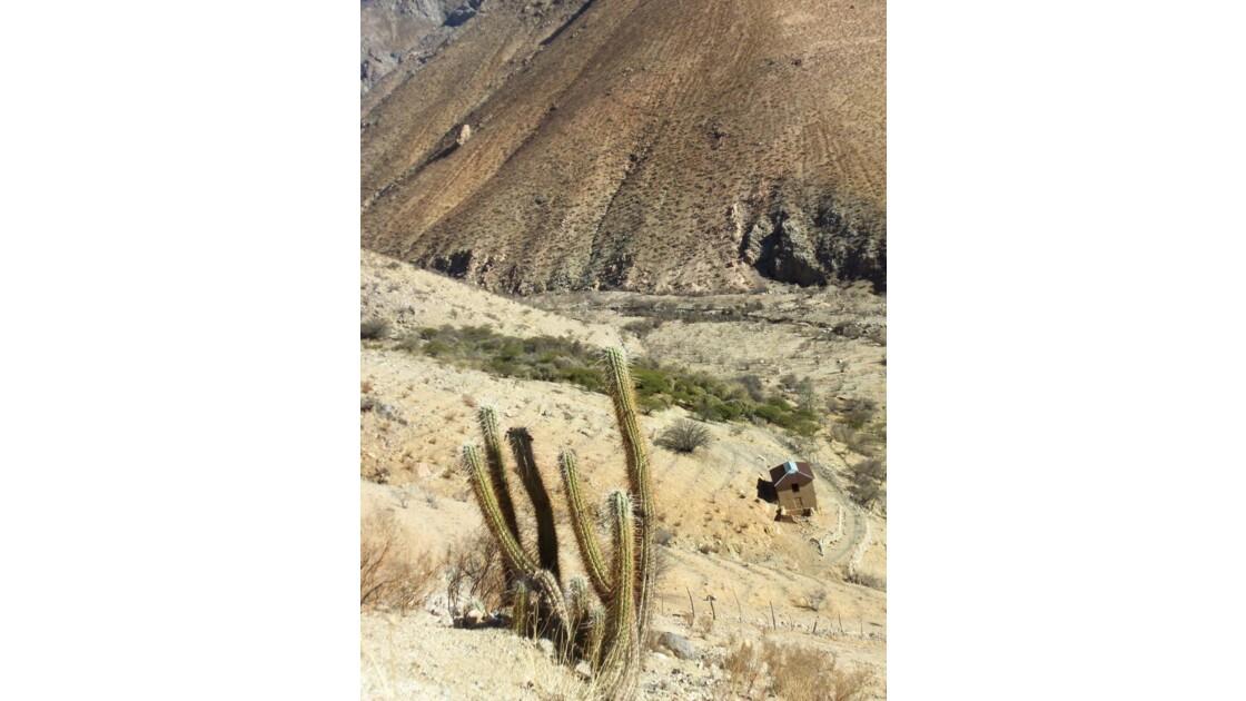 Valle del Elqui, Pisco Elqui