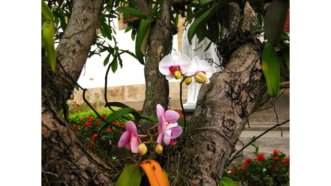 Les orchidées poussent dans les arbres !