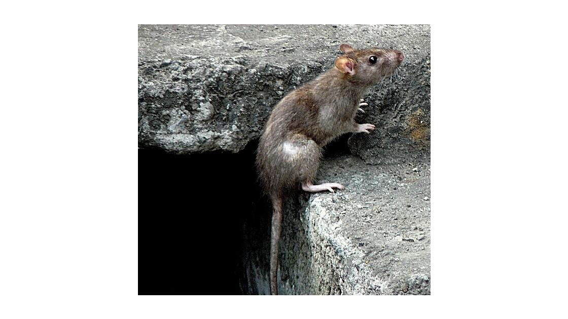 Ratatouille en vadrouille