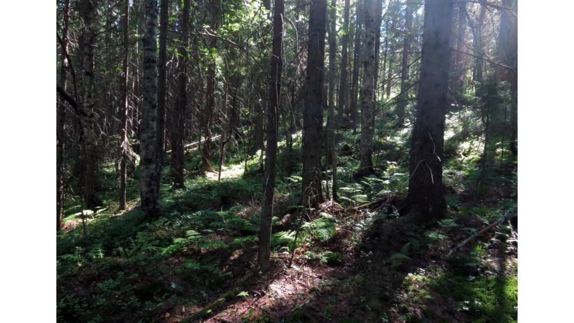 Dans une forêt ...
