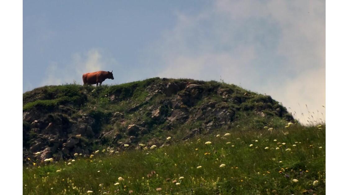 Vache alpiniste