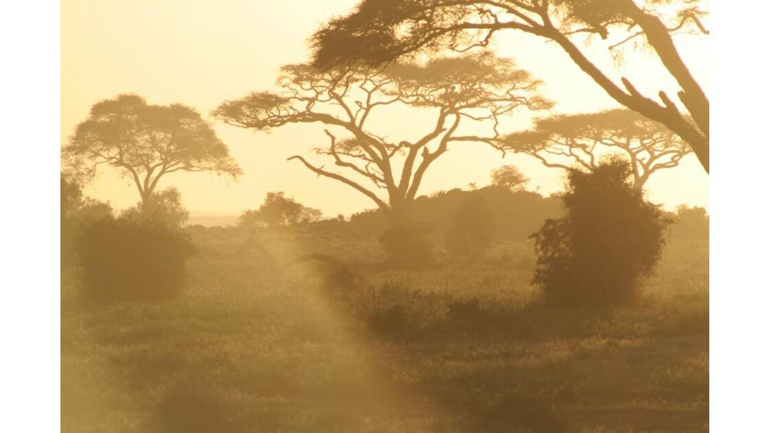 soleil couchant dans la savane