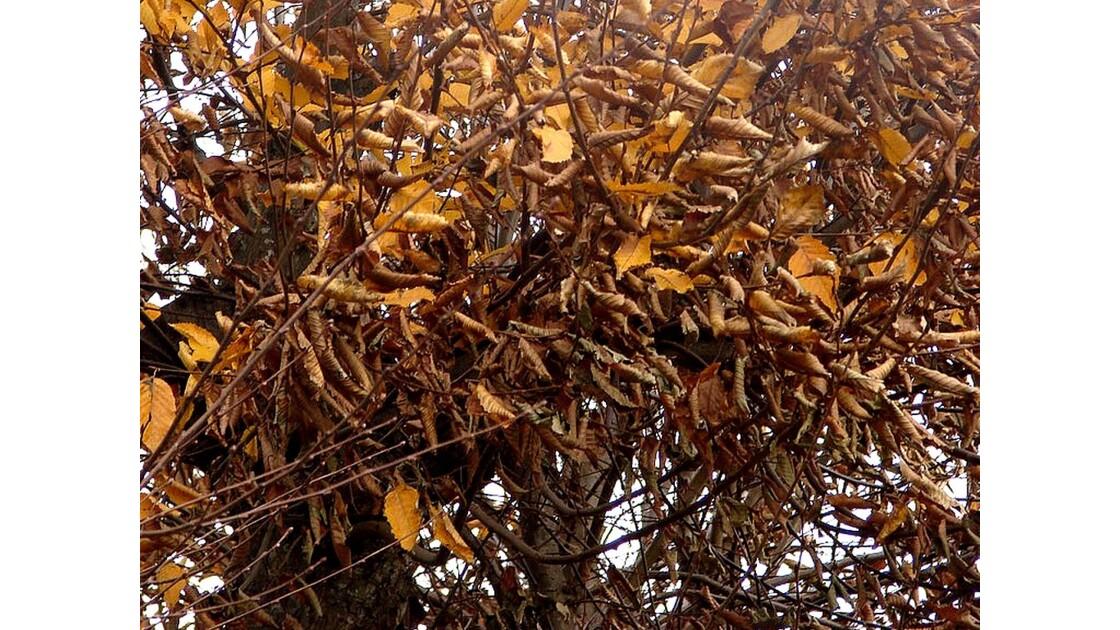 Reste d'automne