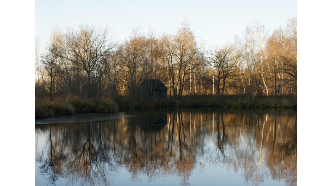 Grand calme sur l'étang.