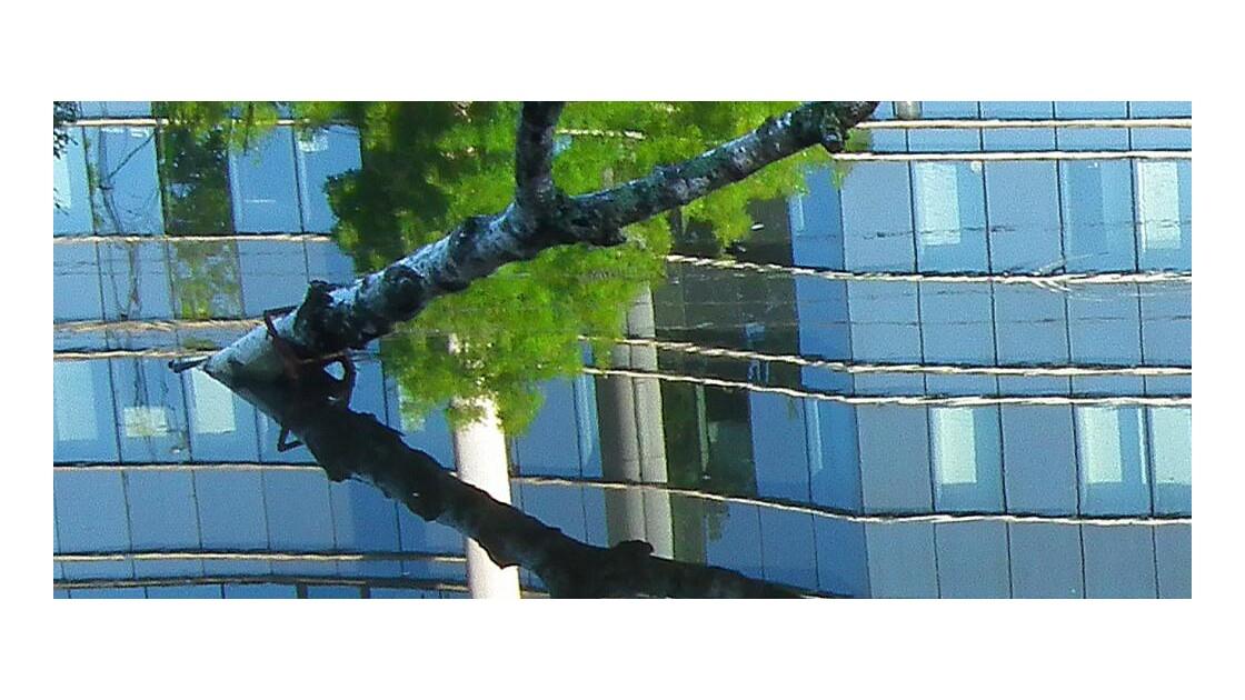 Une simple branche et son reflet