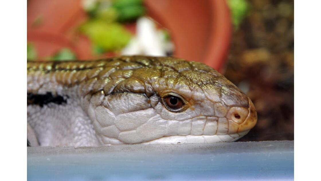 Gros_Plan_Serpent.JPG