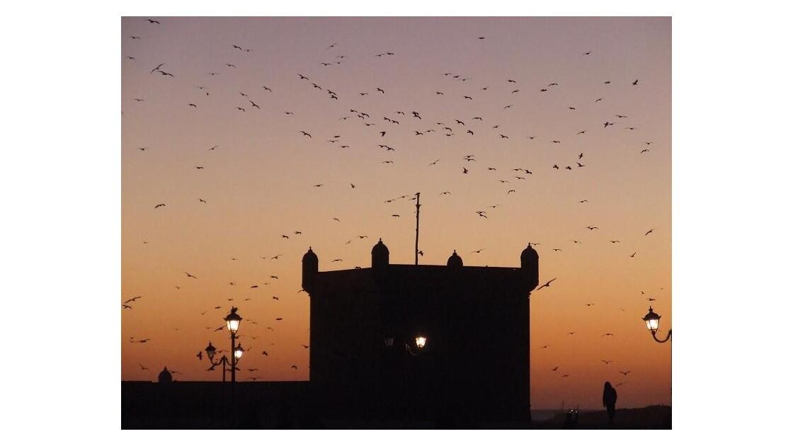 Essaouira tour du Port