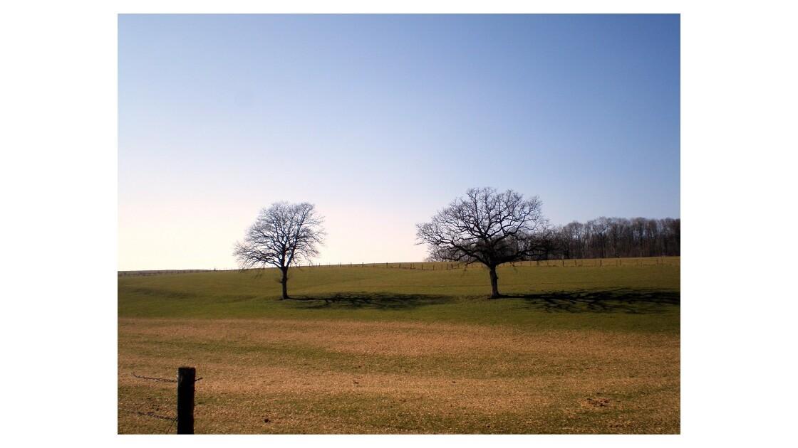 paysage ardennais