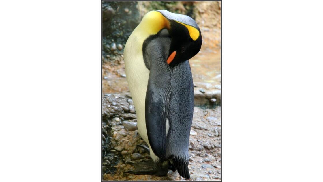 Un amour de pingouin