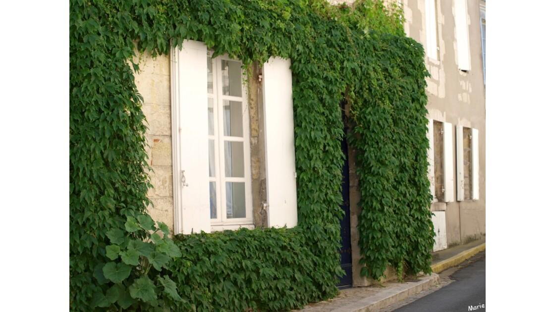 Fenêtre et façade à la vigne vierge_P50