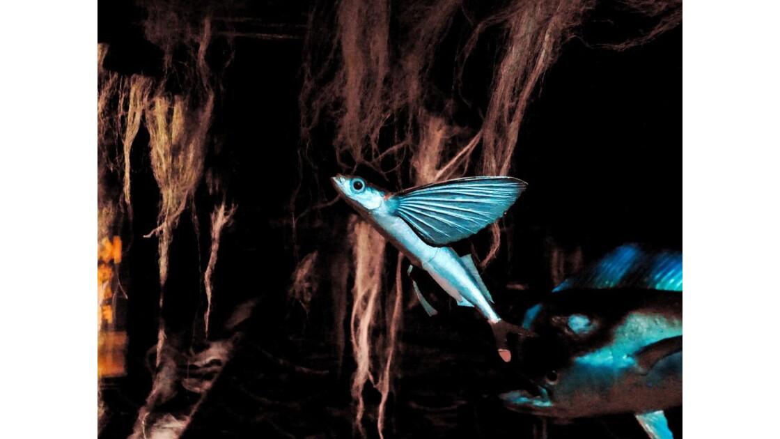 Le petit poisson volant : l'exocet