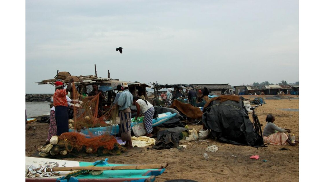 pêche du jour, sur la plage, Negombo
