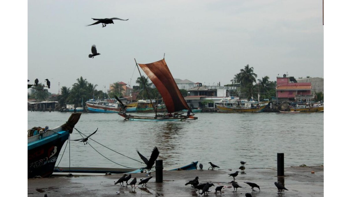 catamaran de pêche, Negombo