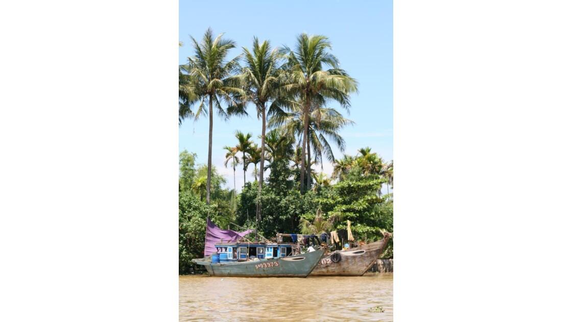bateaux sous cocotier