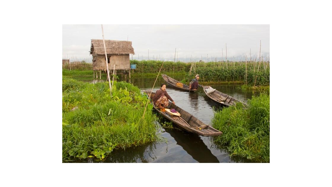Les jardins flottants du lac Inle