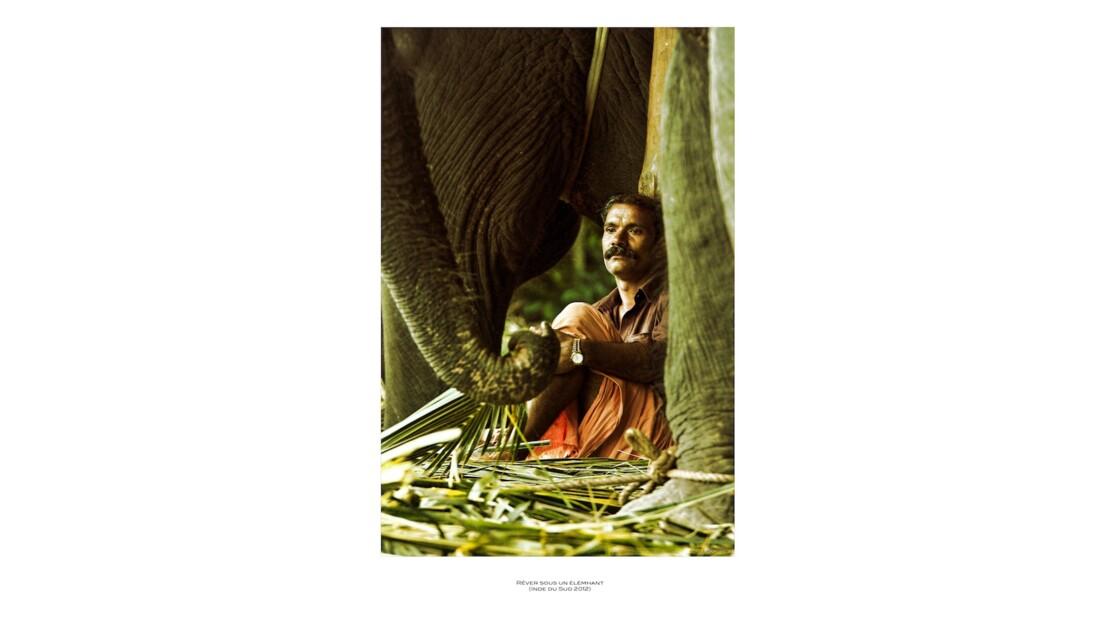 Sous l'éléphant