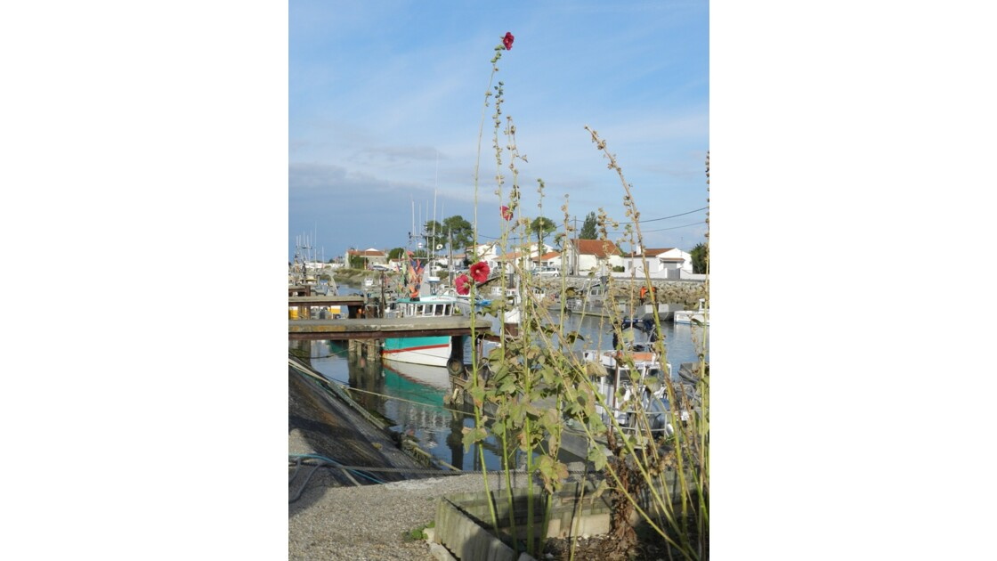 Port de Boyardville, bateau de pêche