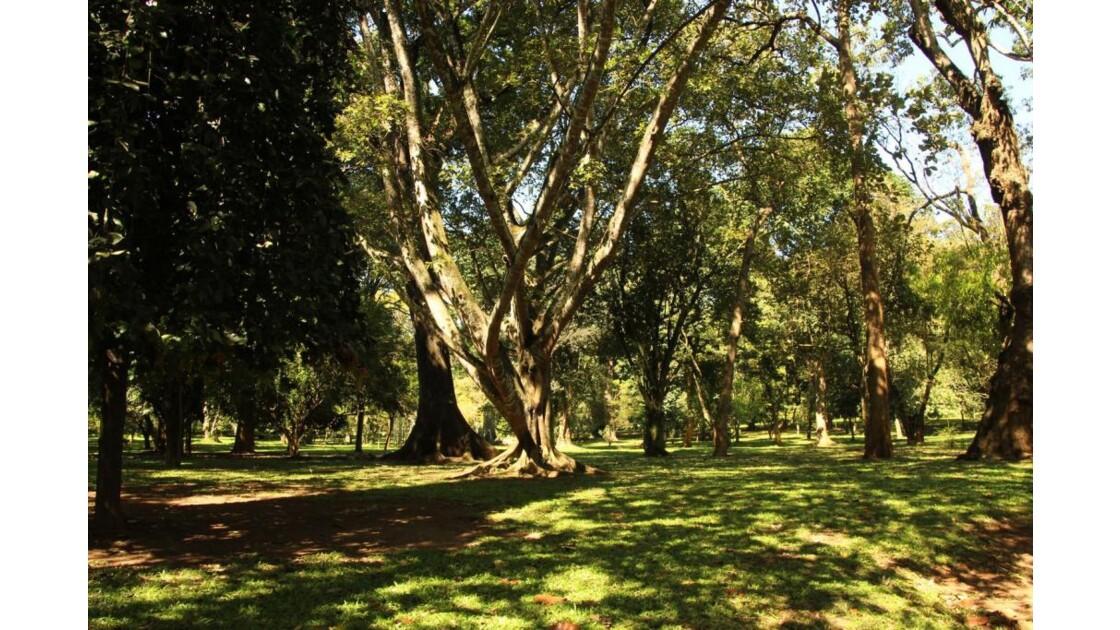 jardin botanique de Peradeniya,Sri Lank