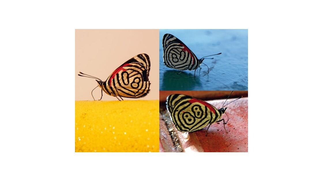 Vincent de Louvigny Papillons numérotés