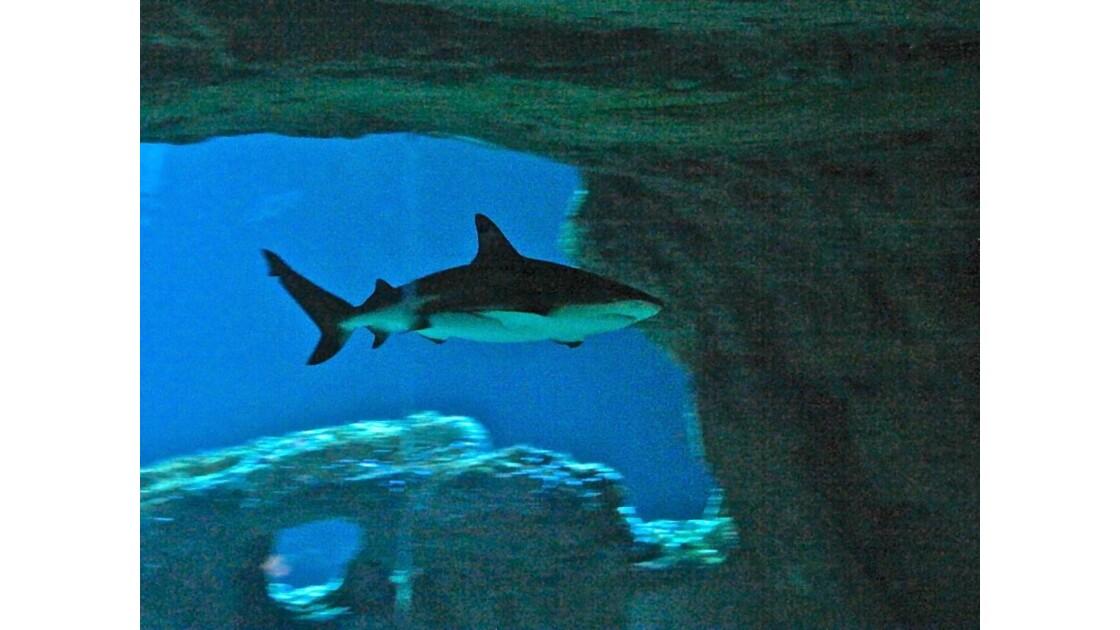 Requin !!