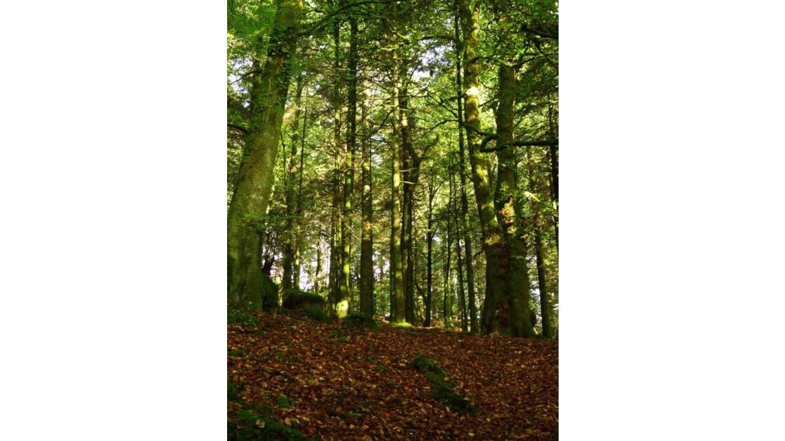 Promenons nous dans les bois.JPG