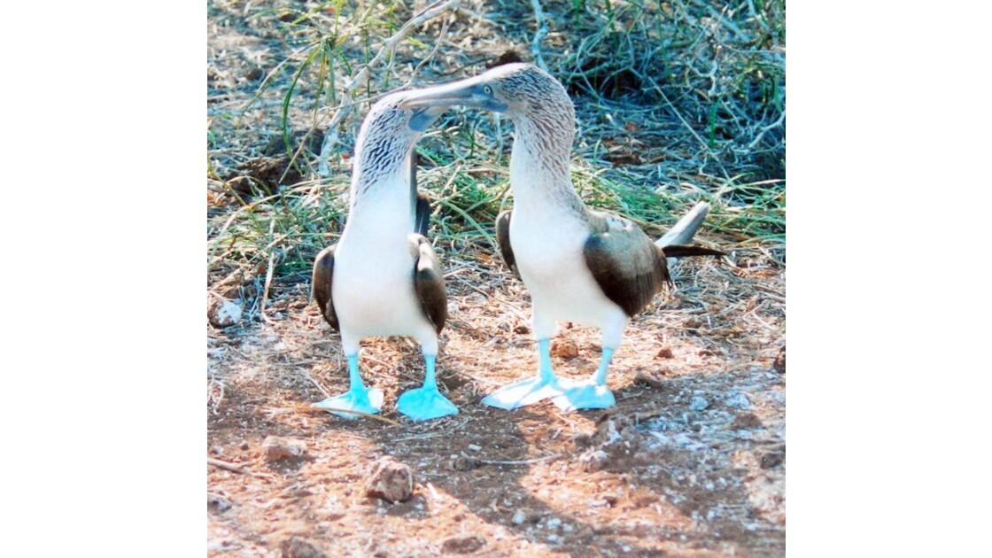 Souvenir des Galapagos