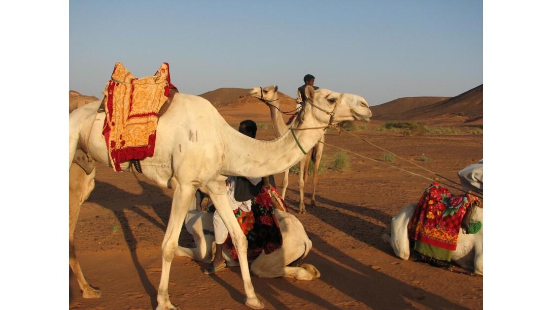 Repos dans le désert soudanais