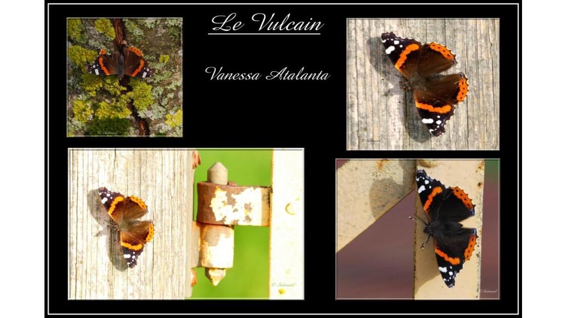 Quatuor  pour un papillon....