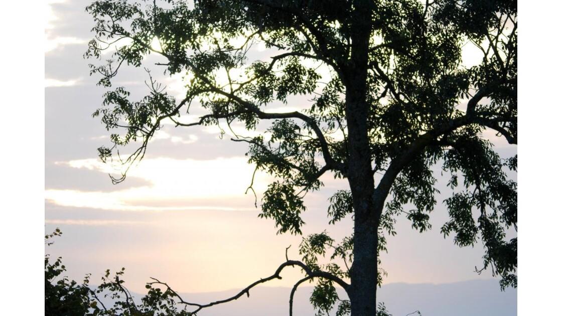 Silhouette sur fond de ciel brumeux....