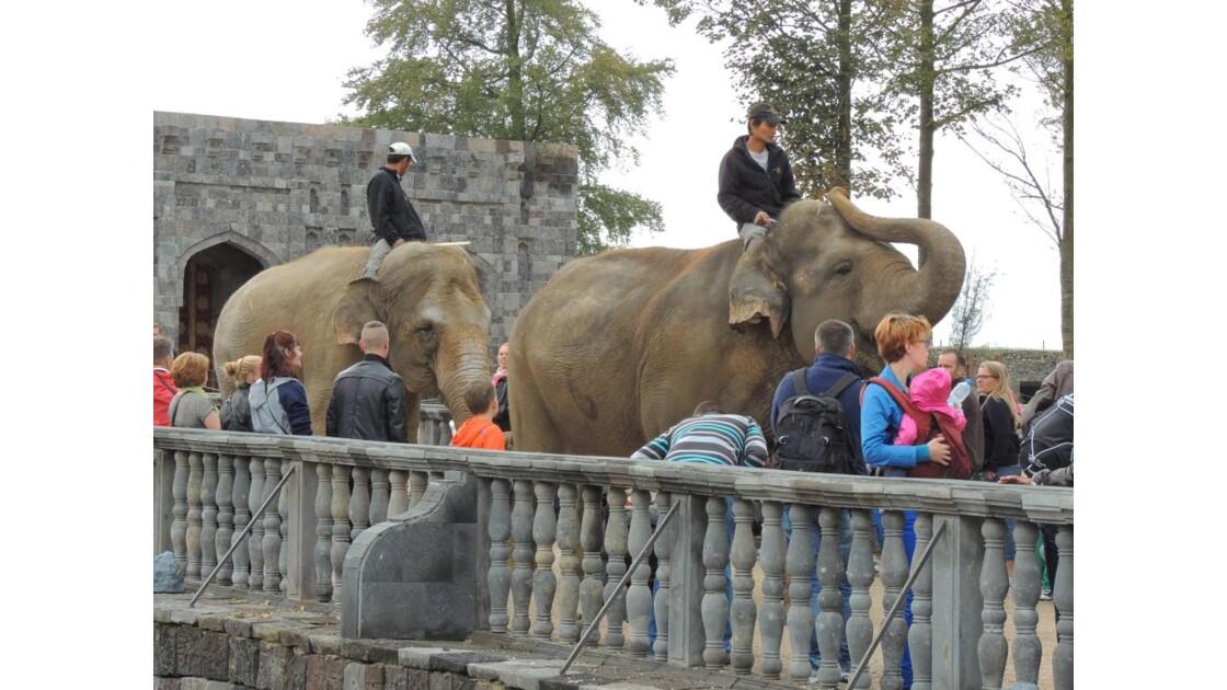 Éléphant  sur la route d'un nouveau...