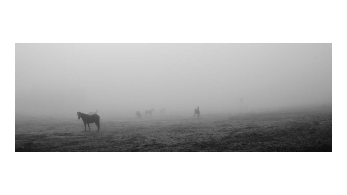 jour de brume, 3
