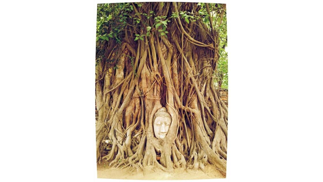 Ayutthaya, tête de Boudha dans le bamya
