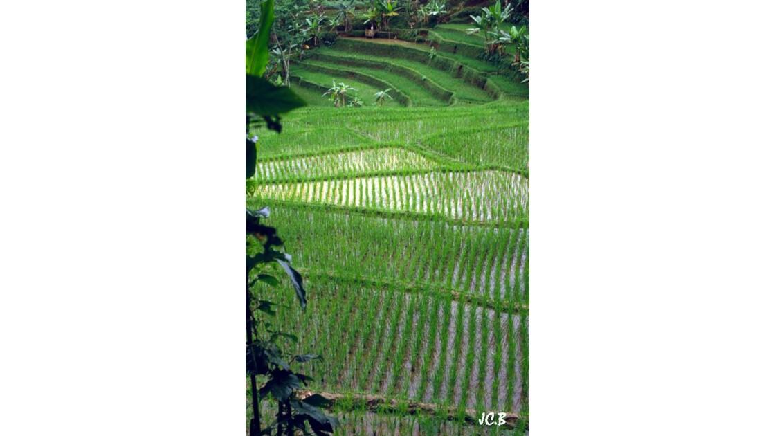Riziéres de Bali - Indonésie
