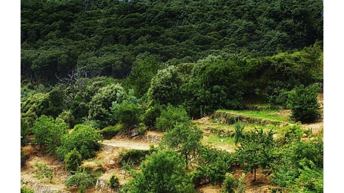 Jardin typiques en haute montagne.