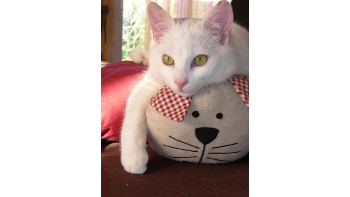 Chat sur coussin chat