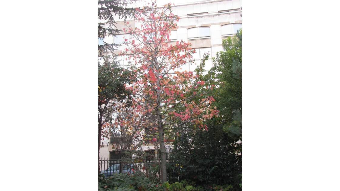 0491___Les_couleurs_de_l_automne___Parc