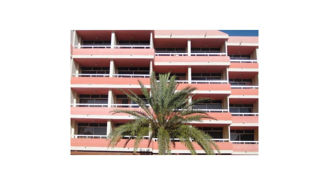 Gran Canaria balcon rose et palmier.JPG