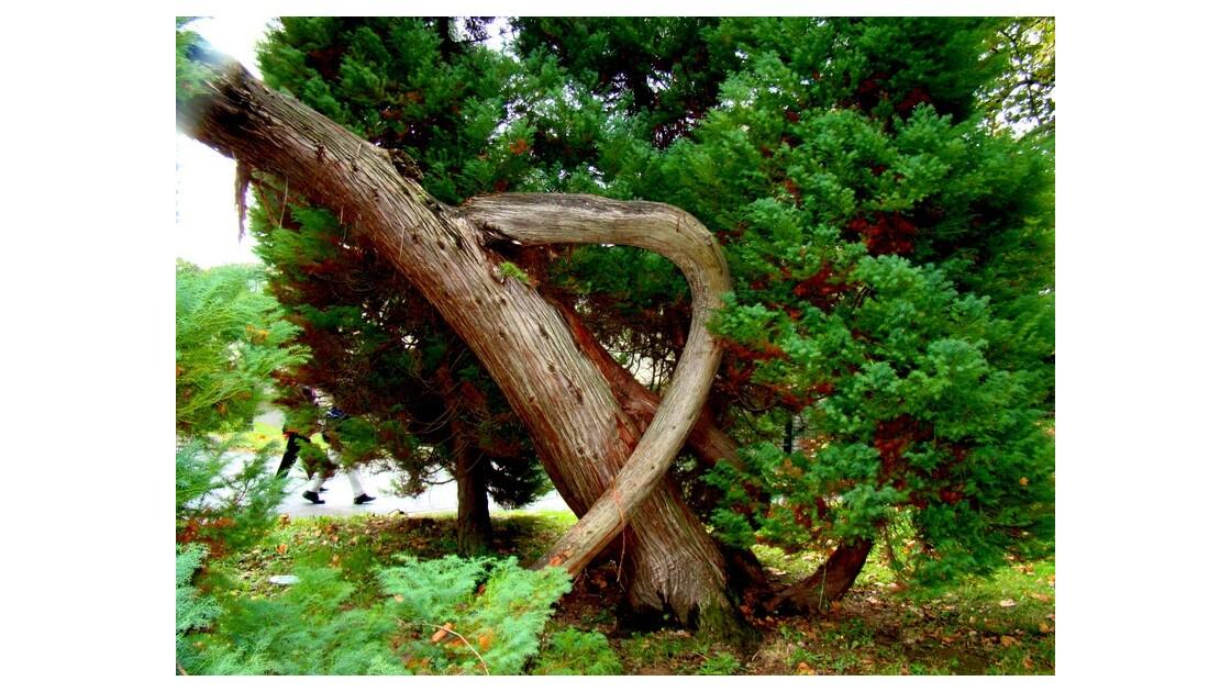 arbre special dans le parc