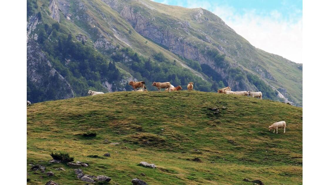 Pyrénées - 2009 09 07 (43)