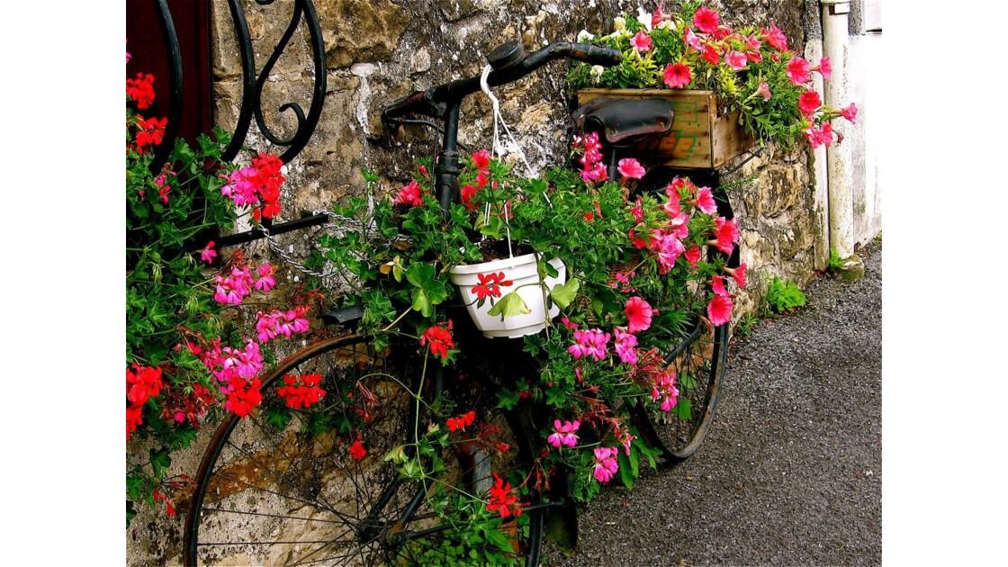 IMG_0790.JPG La bicyclette fleurie