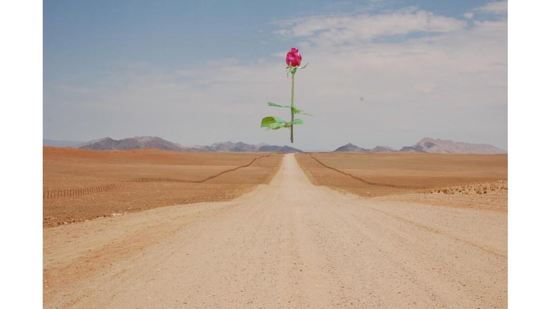 Rose de Namibie ...