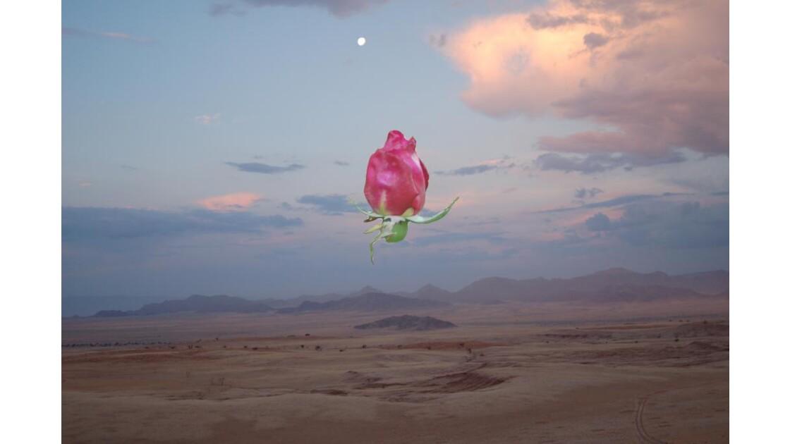 Rose de Namibie