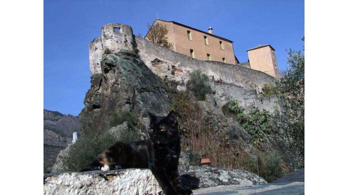 Corse Corte citadelle et chat.JPG