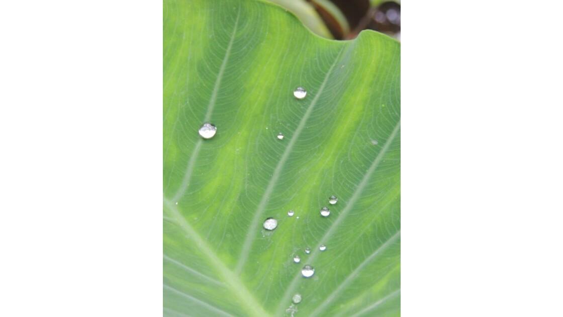 Perles d'eau sur une feuille