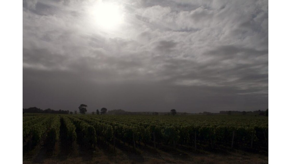 """""""Temps gris sur les vignes ..."""""""