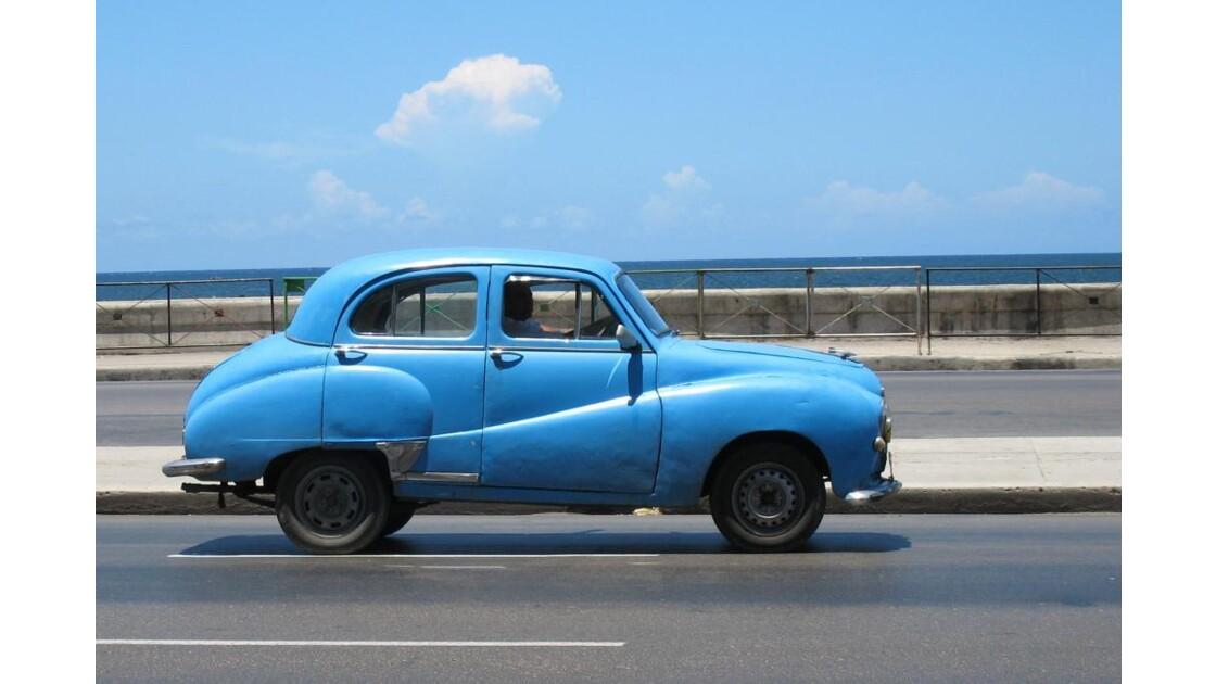 Petite bleue sur Malécon