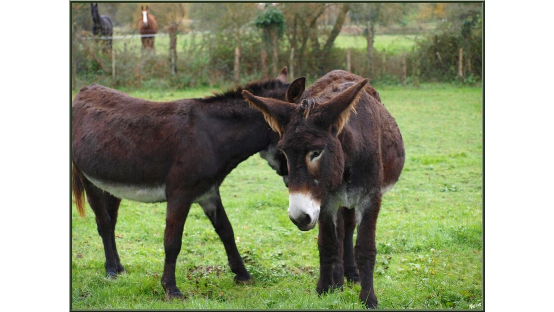 Maman âne et sa fille, instant tendress