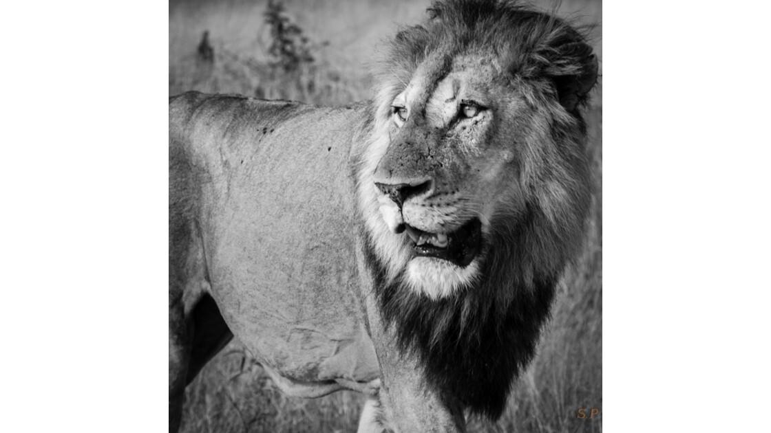 king_3.jpg