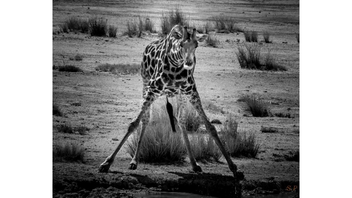 girafe_au_bistrot.jpg