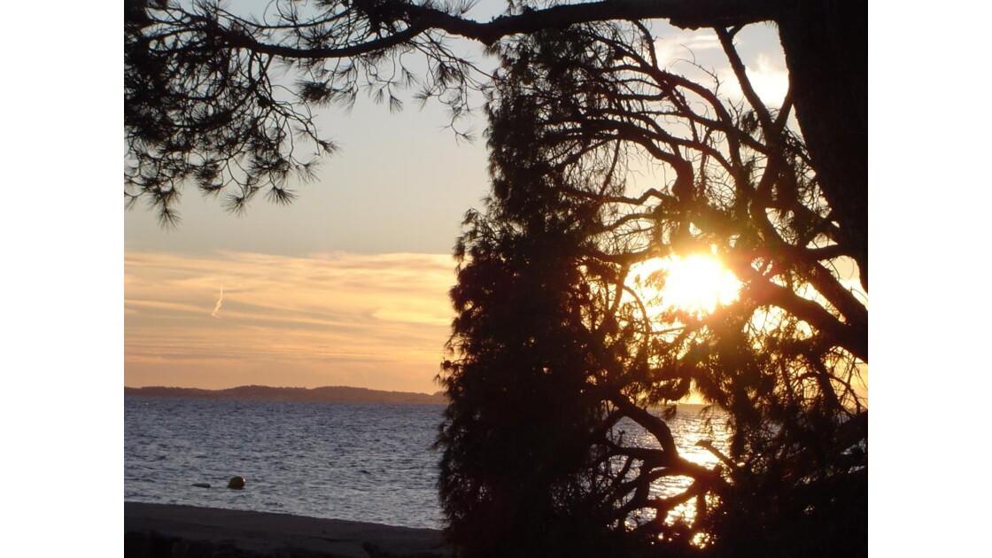 soleil derriere les arbres